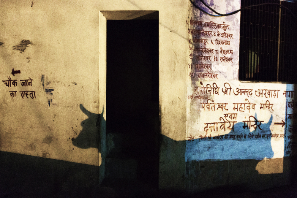 Shadows of cows, two of many that populate the Varanasi streets and Ghats, on the way to the women's ashram.