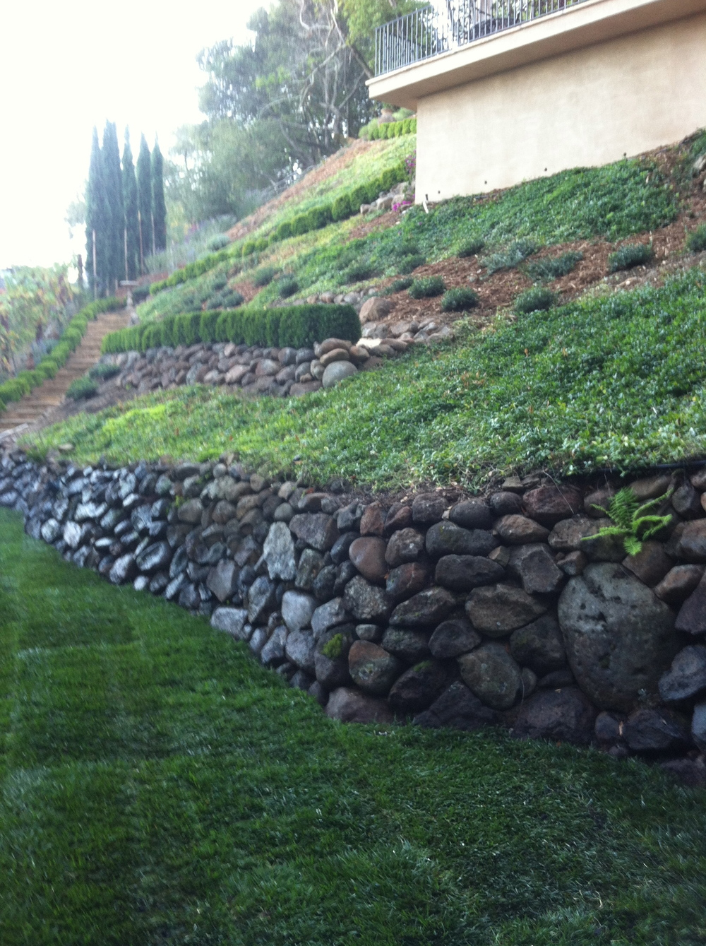 Italianate Landscape: sod Installation  Planting design and construction:   Doniel Ellis Designs