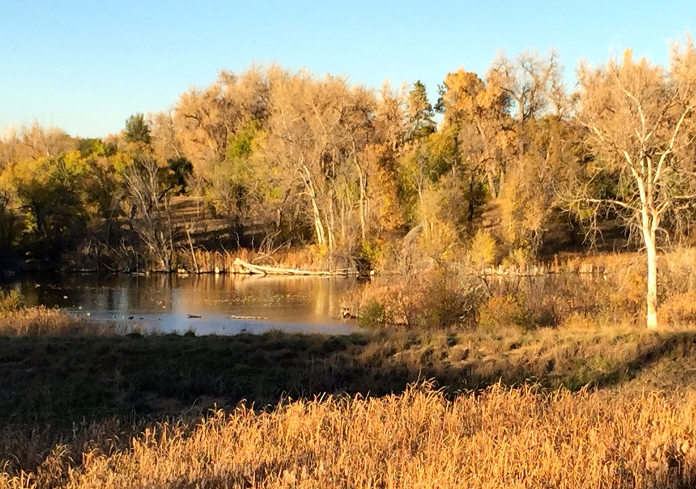 Autumn scene at the Marjorie Perry Nature Preserve in Greenwood Village.