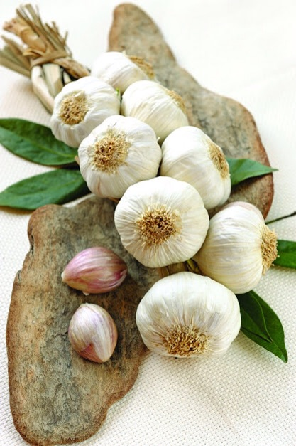 Garlic with its anti-bacterical qualities has many uses ..