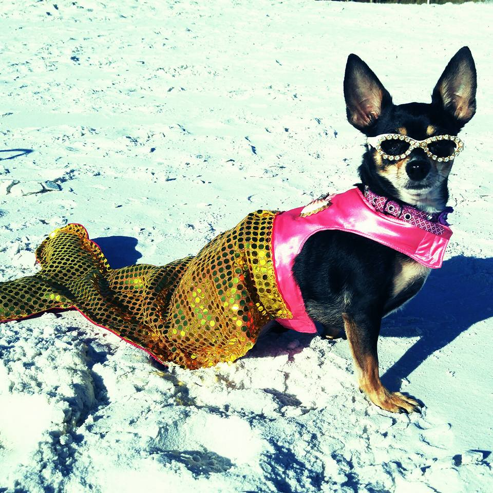 """Stella"" Fletcher-Blue Mountain Beach, Fl."