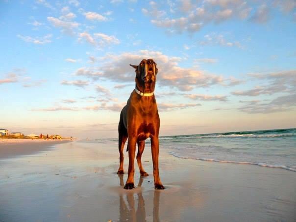 """""""Kramer"""" Radamacher-Dune Allen Beach, Fl."""