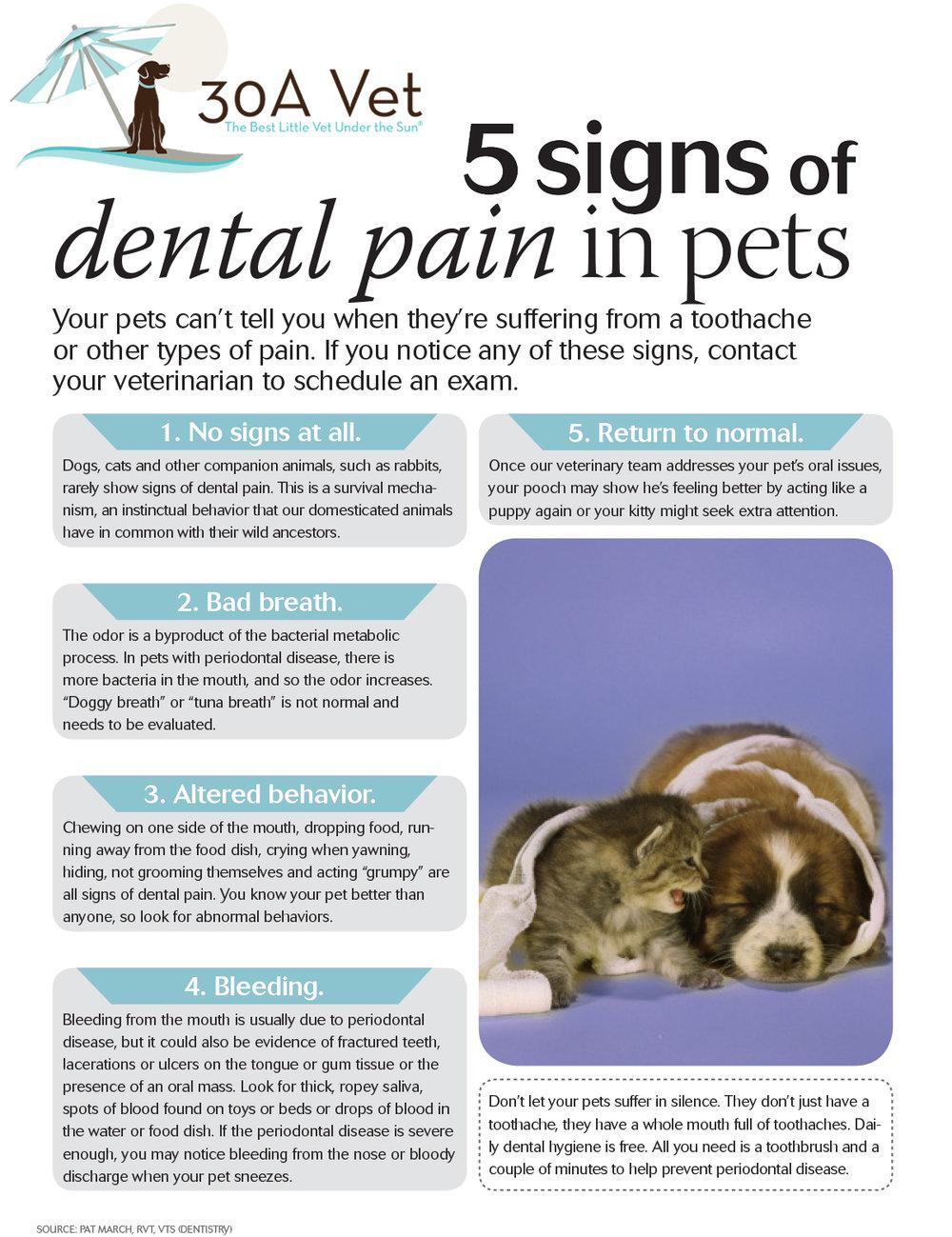 30Avet_dentalpainhandout.jpg