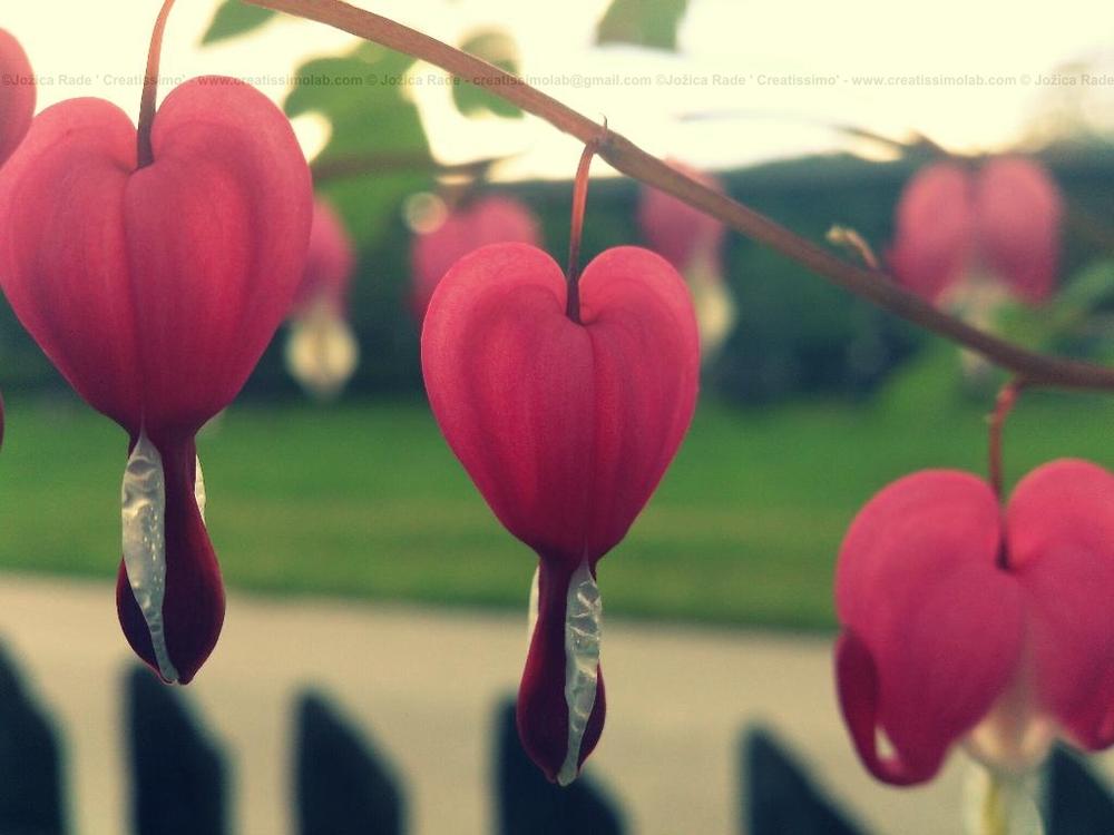 Srčnost se najde na vsakem vogalu, če imaš odprto srce...