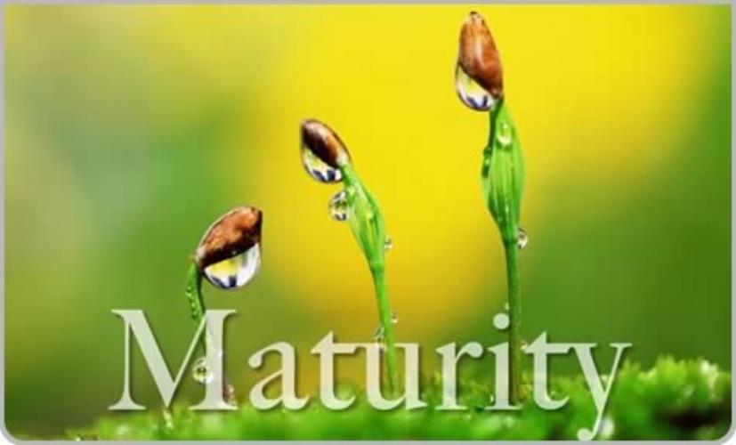 maturity2.jpg