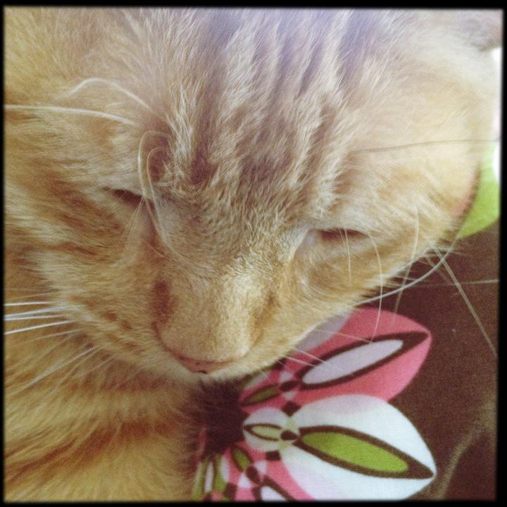 buddythecat03.jpg