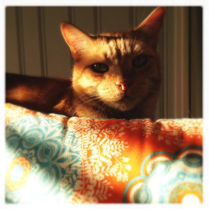 buddythecat05.jpg