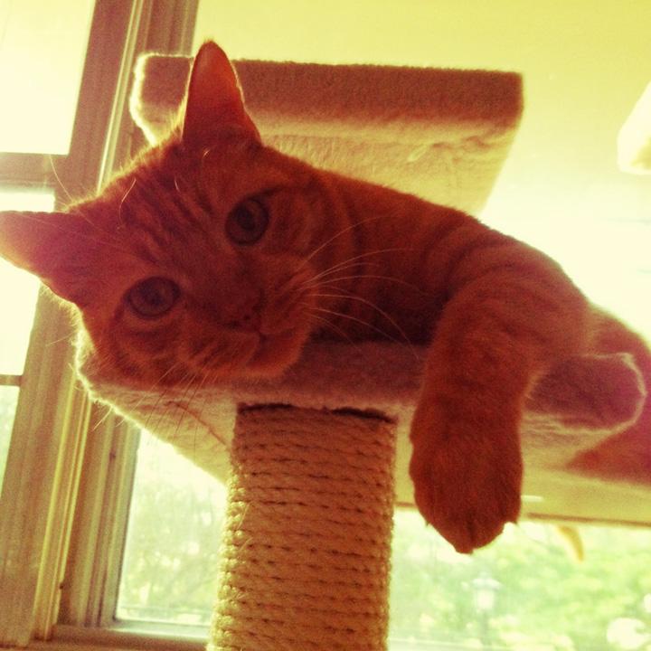 buddythecat07.jpg
