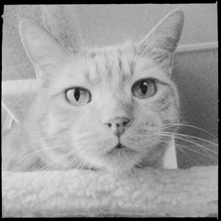 buddythecat12.jpg