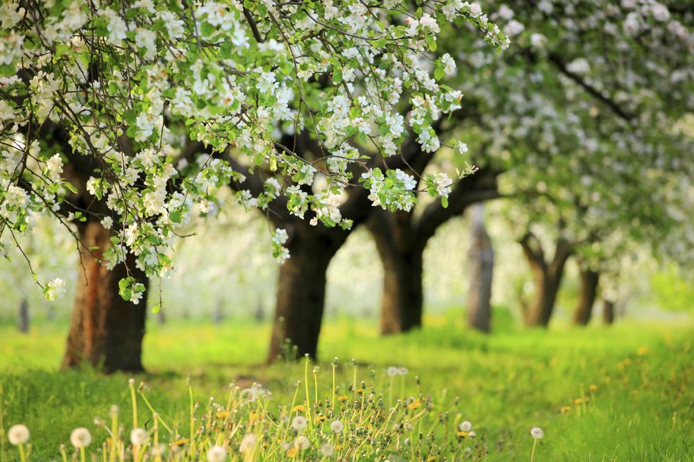 trees (Medium).jpg