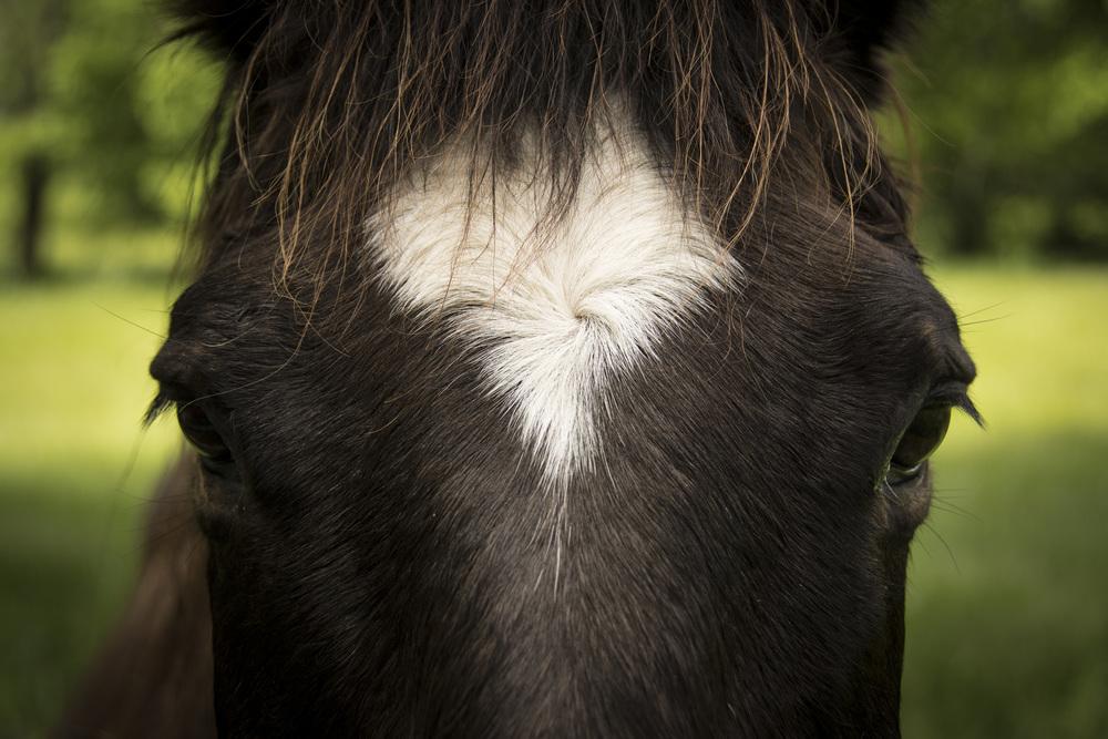 HorseSwirl.jpg