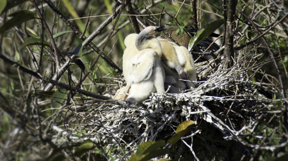 Everglades_20140217_021.jpg