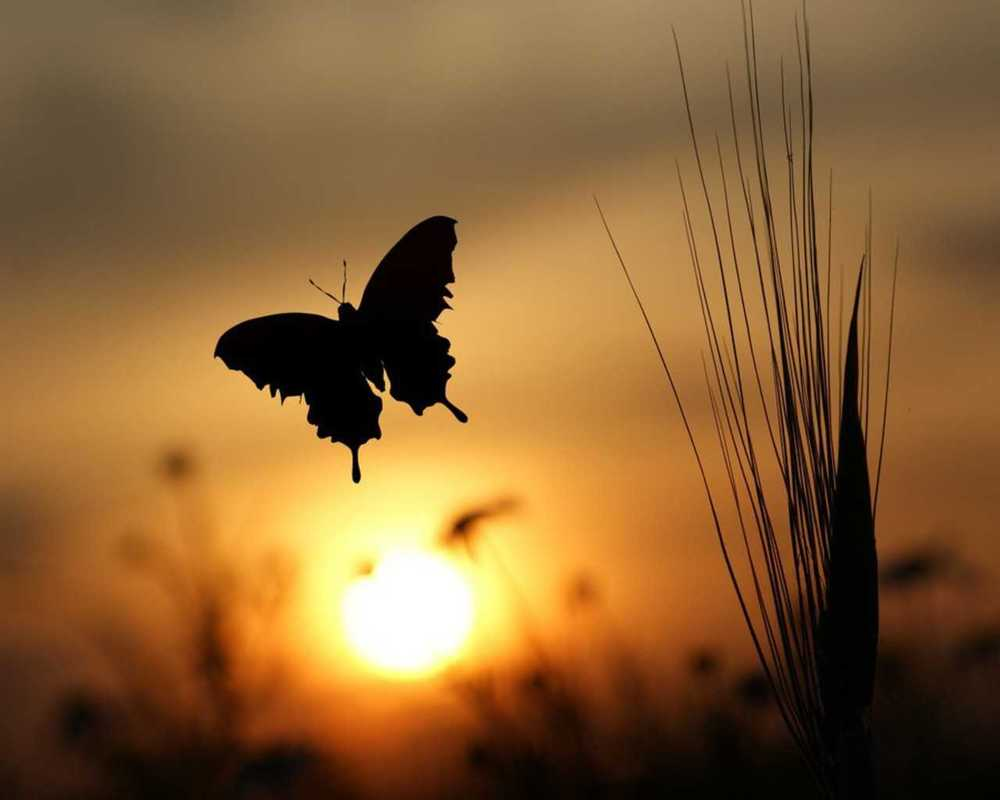 Image result for lonely butterfly pictures