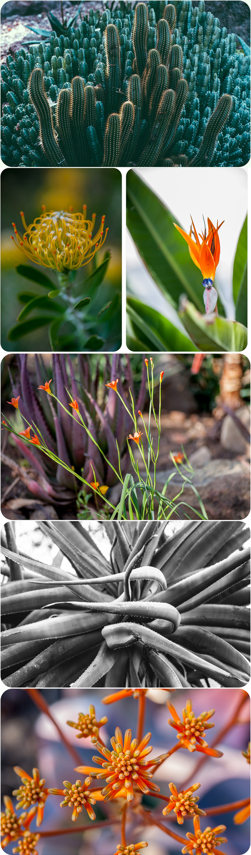 ojai_taft_gardens