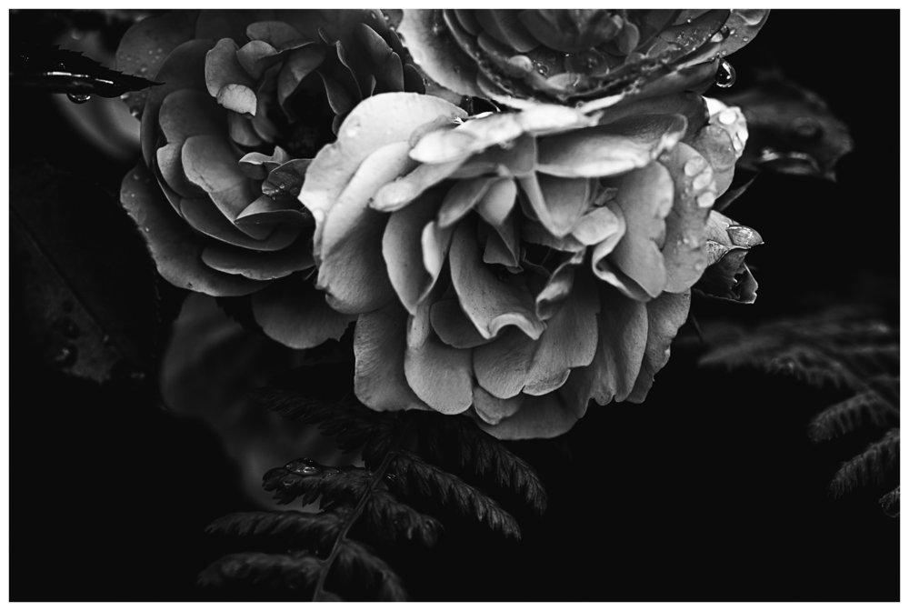 DSC_1144-Edit.jpg