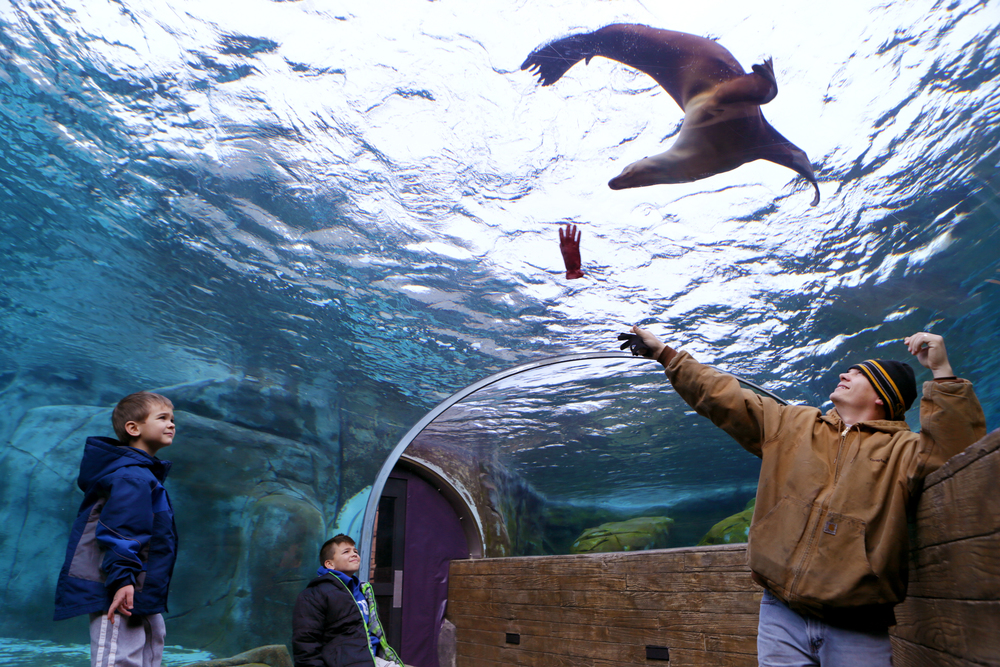 "David Eagan (right) throws a glove back and forth with his sons, Micah (far left), 4, and David (center), 10, for Mia, a 3-year-old California sea lion to chase at the St. Louis Zoo on Sunday, Feb. 22, 2015.  ""There's not much to do in the cold and we wanted to get out,"" said wife Melissa Eagan (not pictured). ""We figured out it was warm in here."""