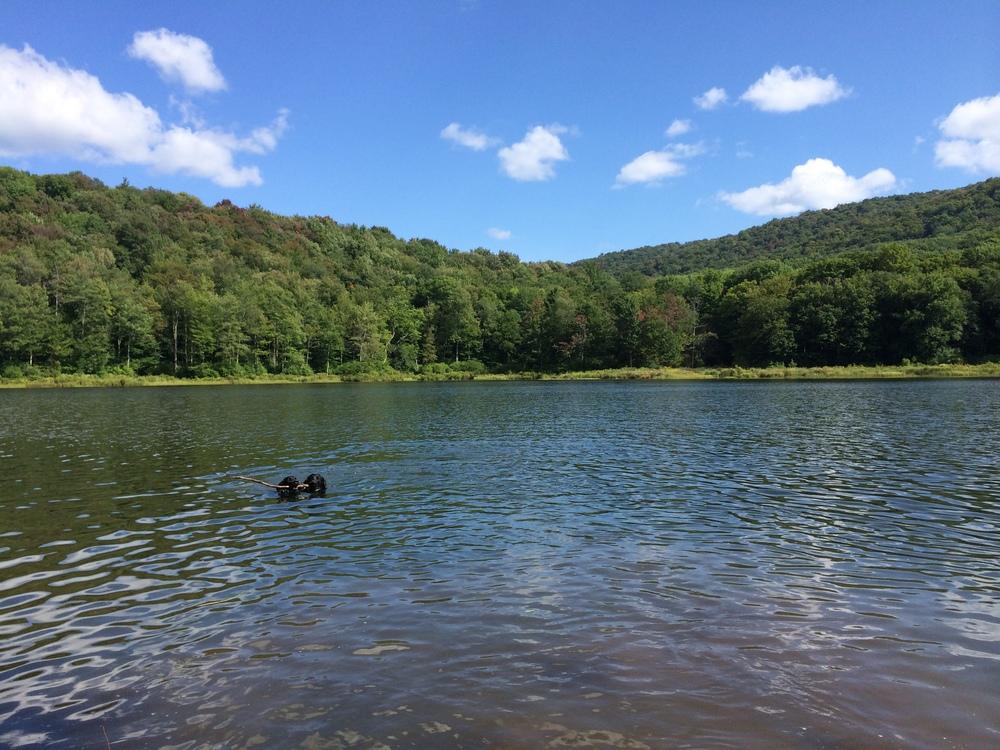 Alder lake