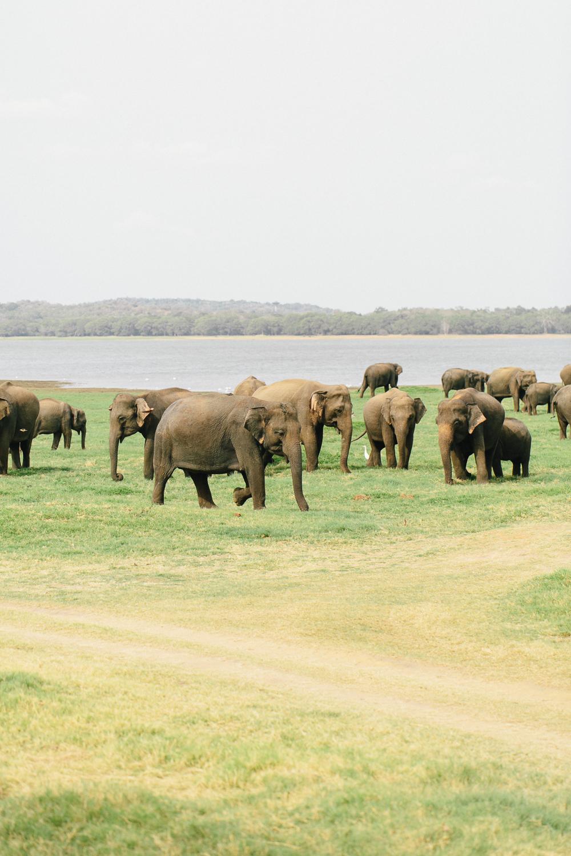 Fernwehosophy Sri Lanka Julia Winkler (6).jpg