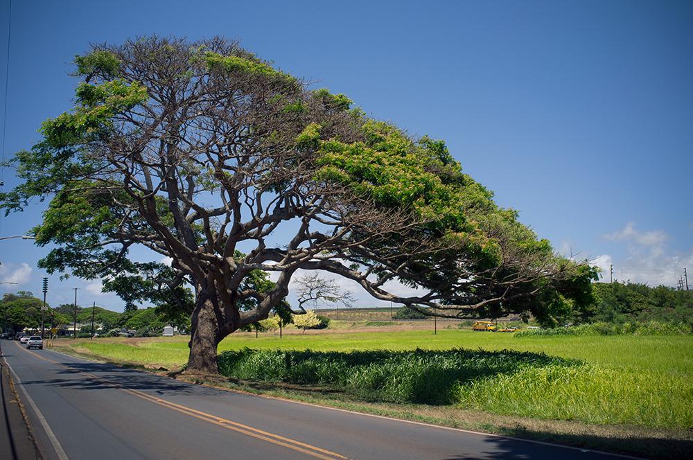 09_Oahu-Haleiwa.jpg