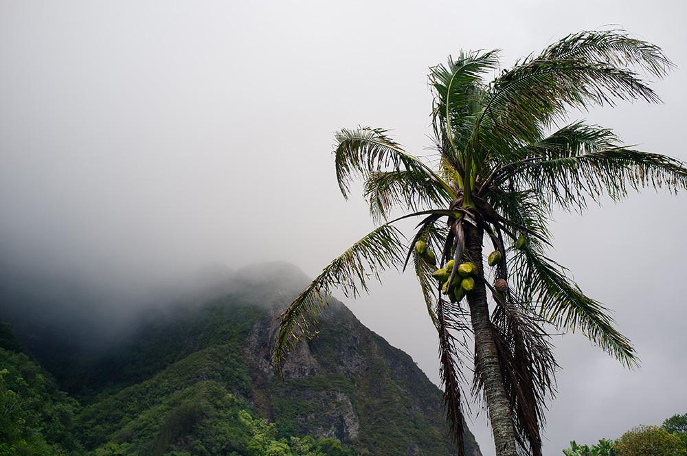 23_Maui-Iao Valley.jpg