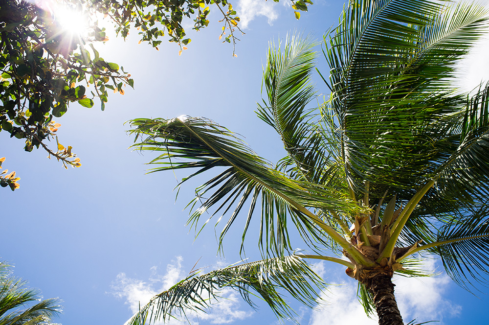 38_Oahu-HNL-Waikiki Beach Park.jpg