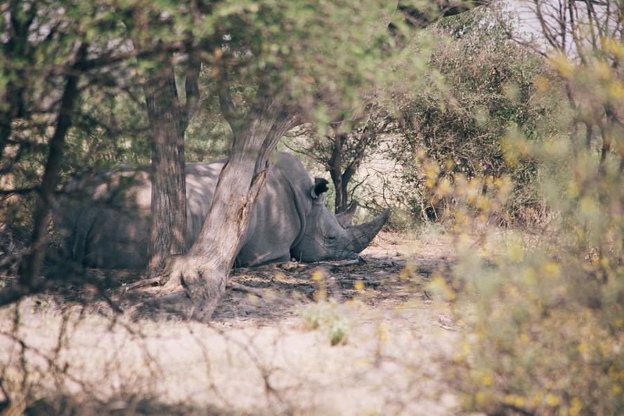 Botswana_Julia_Hofmann (1 von 50).jpg