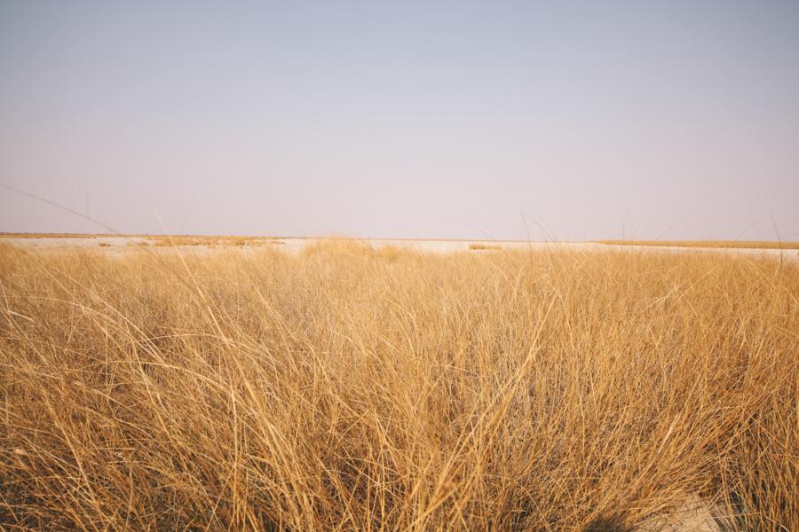 Botswana_Julia_Hofmann (4 von 50).jpg
