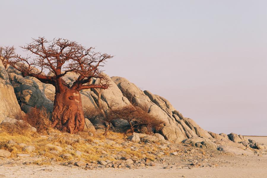 Botswana_Julia_Hofmann (8 von 50).jpg