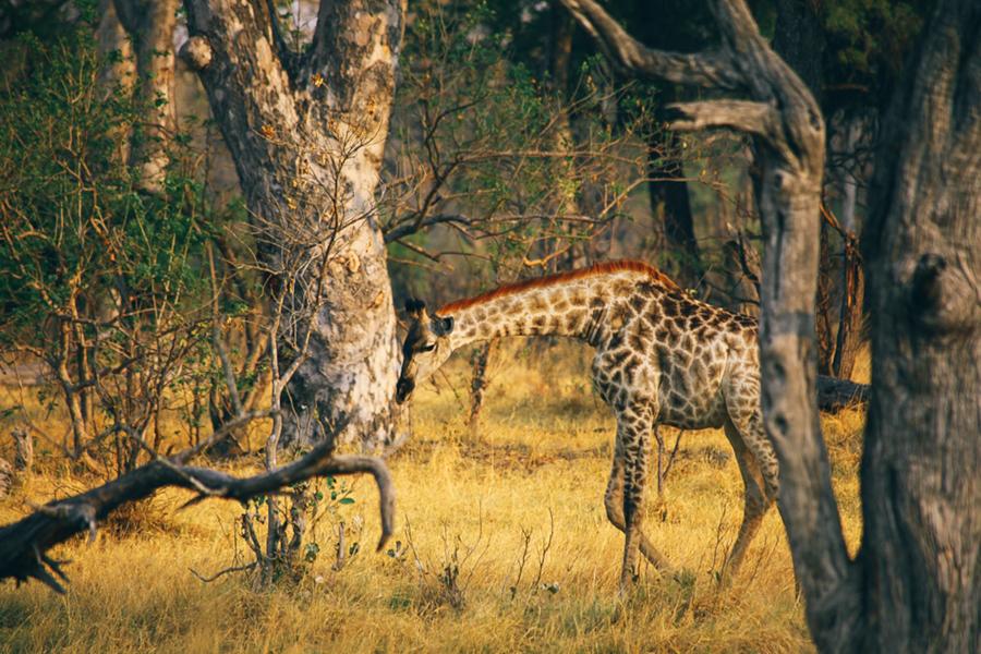 Botswana_Julia_Hofmann (11 von 50).jpg