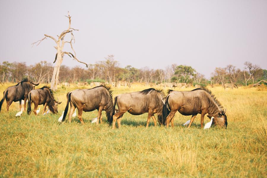 Botswana_Julia_Hofmann (13 von 50).jpg