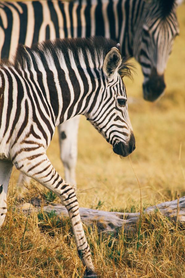 Botswana_Julia_Hofmann (14 von 50).jpg