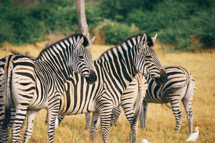 Botswana_Julia_Hofmann (15 von 50).jpg
