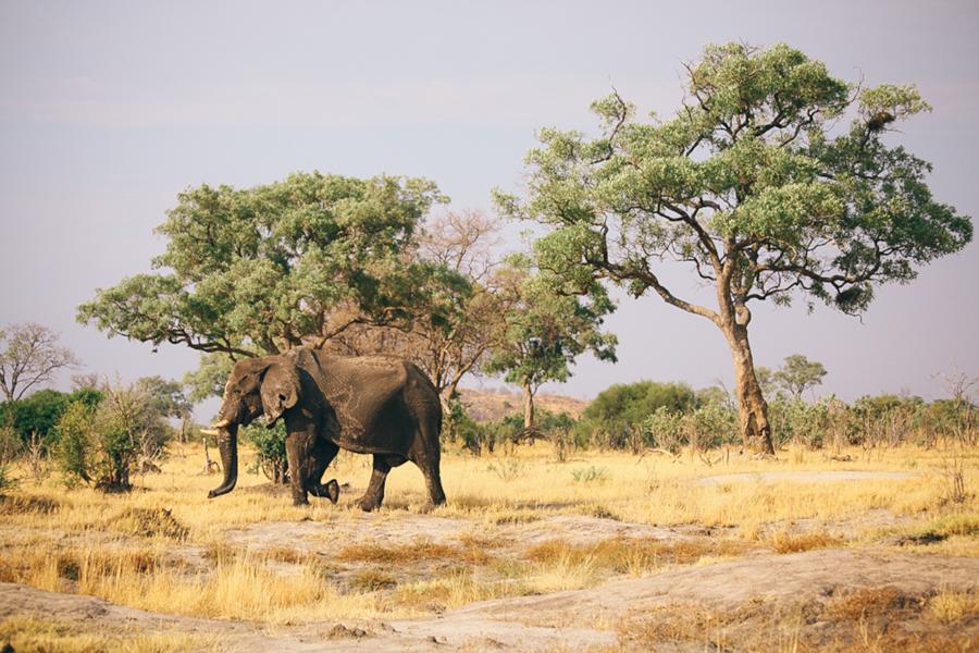Botswana_Julia_Hofmann (20 von 50).jpg