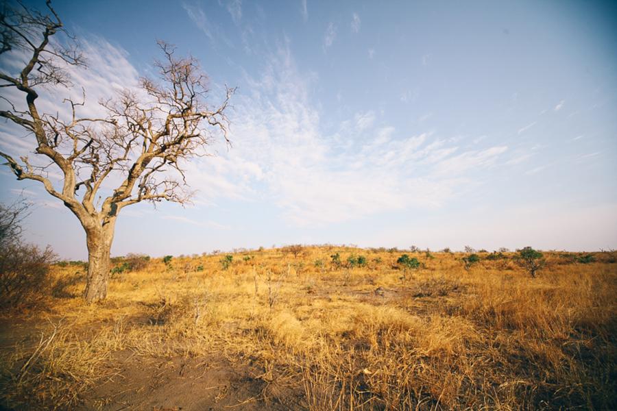 Botswana_Julia_Hofmann (21 von 50).jpg