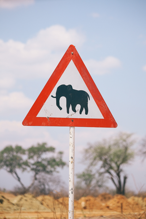 Botswana_Julia_Hofmann (26 von 50).jpg