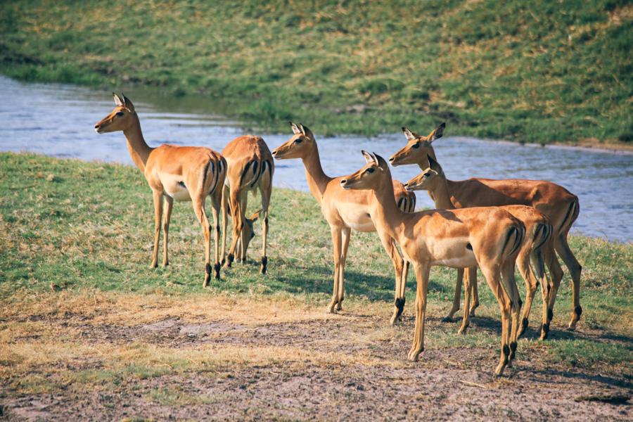 Botswana_Julia_Hofmann (29 von 50).jpg