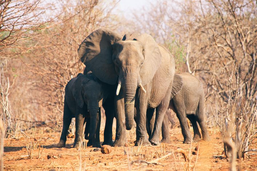 Botswana_Julia_Hofmann (31 von 50).jpg