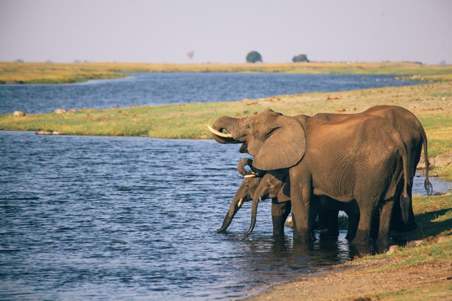 Botswana_Julia_Hofmann (32 von 50).jpg
