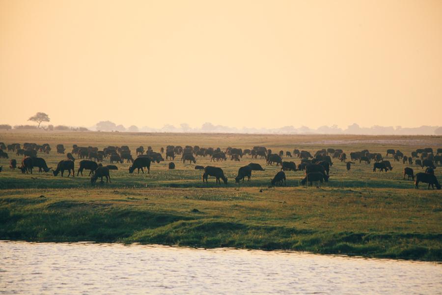 Botswana_Julia_Hofmann (33 von 50).jpg