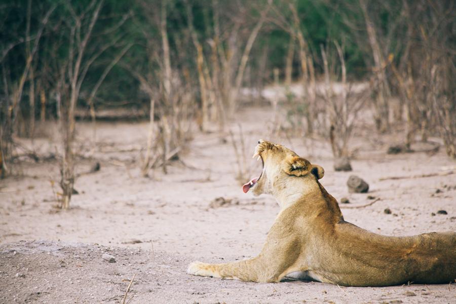 Botswana_Julia_Hofmann (37 von 50).jpg