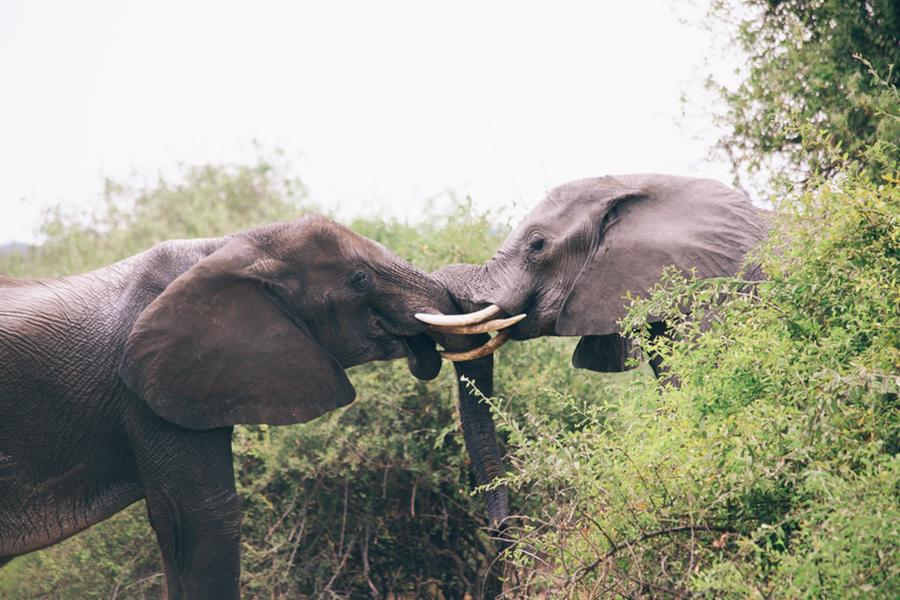 Botswana_Julia_Hofmann (39 von 50).jpg