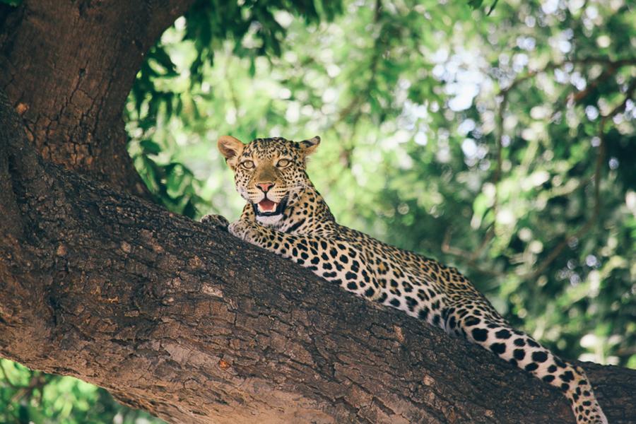Botswana_Julia_Hofmann (38 von 50).jpg