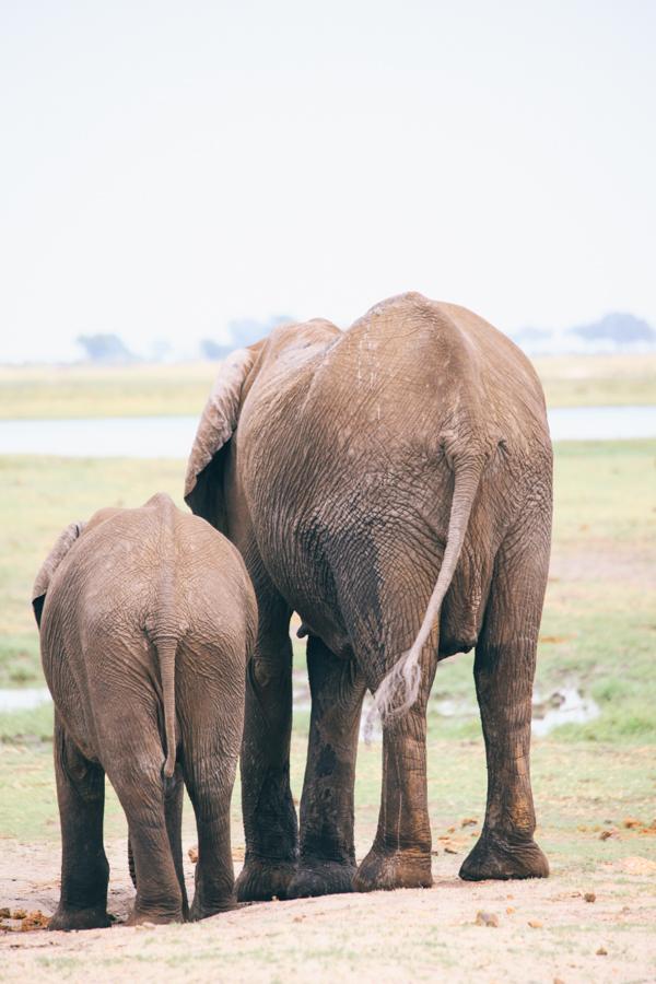 Botswana_Julia_Hofmann (41 von 50).jpg