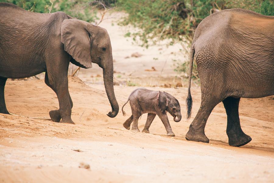 Botswana_Julia_Hofmann (40 von 50).jpg