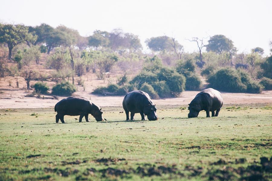 Botswana_Julia_Hofmann (44 von 50).jpg