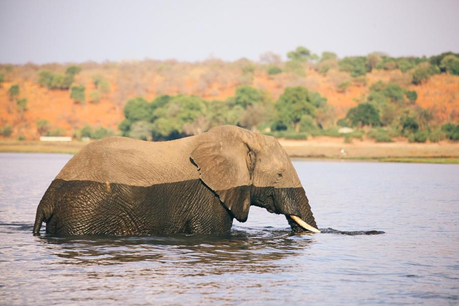 Botswana_Julia_Hofmann (45 von 50).jpg
