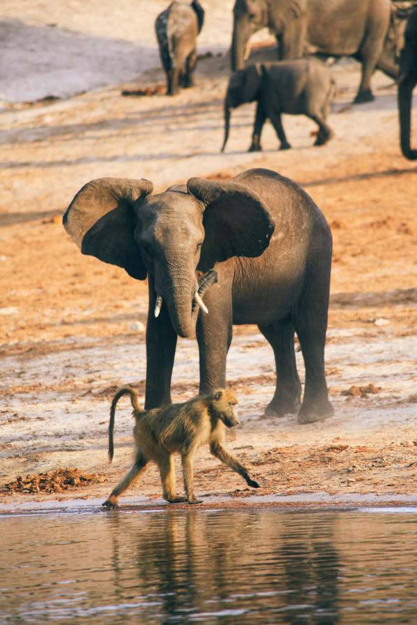 Botswana_Julia_Hofmann (48 von 50).jpg