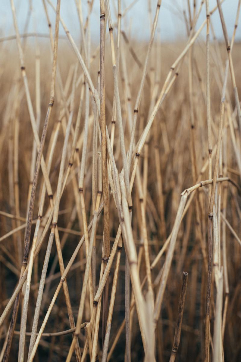 Fernwehosophy Friesland_LindaMüller  (2).jpg