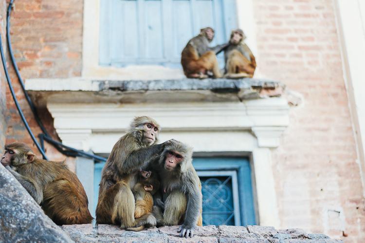 Fernwehosophy Weddingpilots Travel Kathmandu (40).jpg