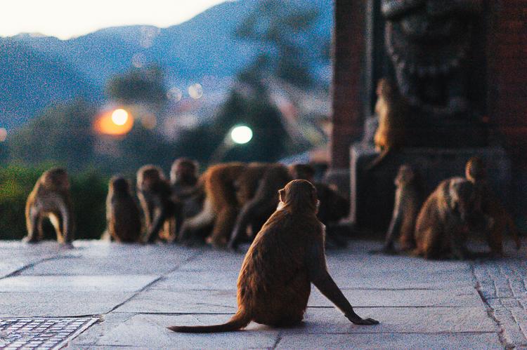 Fernwehosophy Weddingpilots Travel Kathmandu (47).jpg